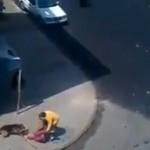 Attaque de chiens en plein ville au Maroc