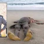 Trouvé le corps d'un jeune homme sur la plage de Bouyafar