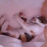Le chat enragé serait d'origine marocaine selon la préfecture du Val d'Oise