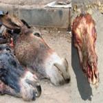 Scandale de viande d'âne à Casablanca
