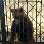 Vidéo. L'agonie continue pour les animaux du zoo de Aïn Sebaâ