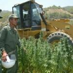 Le Maroc, reste le plus grand producteur de cannabis au monde