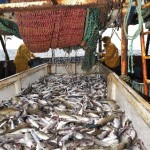 Tensions entre l'Europe et le Maroc autour de la pêche