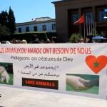 Un sit-in pour la protection des animaux (Vidéo)
