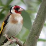 Vers l'application d'une loi protégeant les espèces en danger