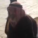 Face à la police israélienne, un Palestinien courageux psalmodie le Coran devant Al-Aqsa