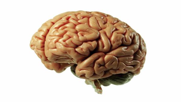 Decouverte d'un ver dans le cerveau d'un Anglais atteint de maux de tête
