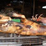 Découverte de 37 chiens préparés pour être vendus comme saucisses