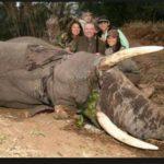 Cette famille très riche a payé pour tuer cet éléphant de 50 ans
